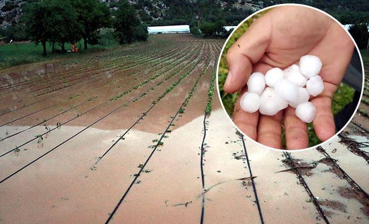 Ceviz büyüklüğündeki dolu, tarım alanlarına zarar verdi