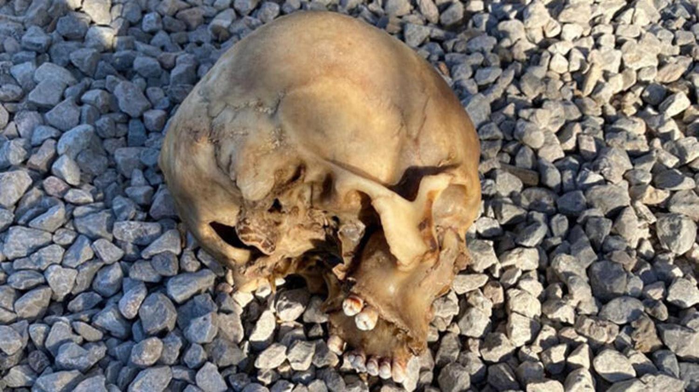 Köpeklerin bulduğu kafatası olayında 4 gözaltı