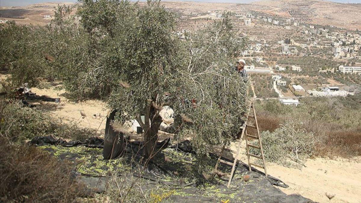 İşgalci İsrail halkı Filistinli çiftçilere saldırdı