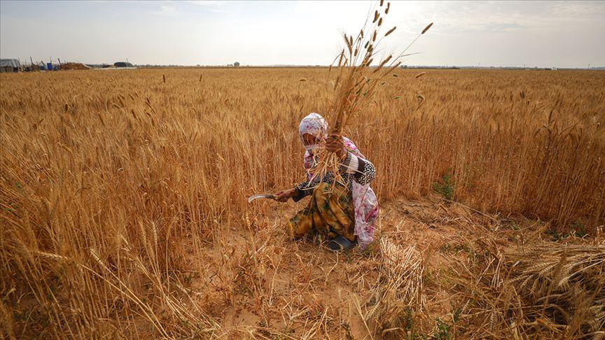 İsrail askerlerinin ihlalleri Gazzeli kadın çiftçileri de hedef alıyor
