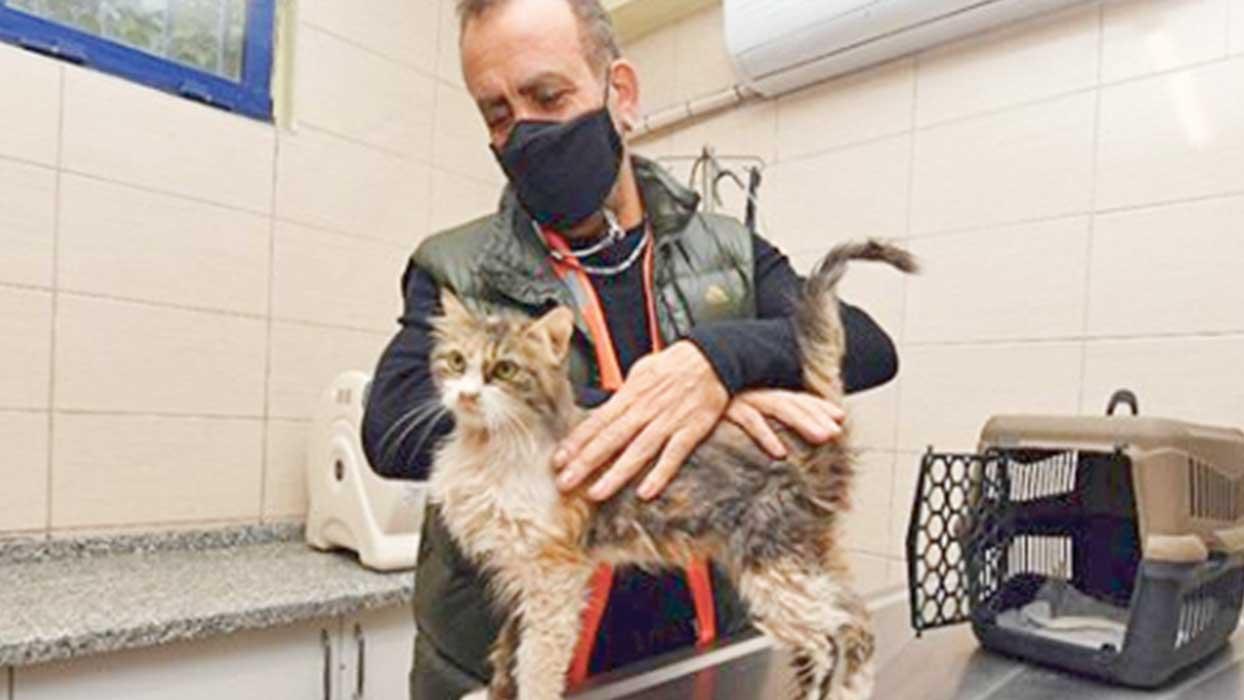 Haluk Levent'ten alkışlanacak hareket... Depremzede kediyi sahiplendi