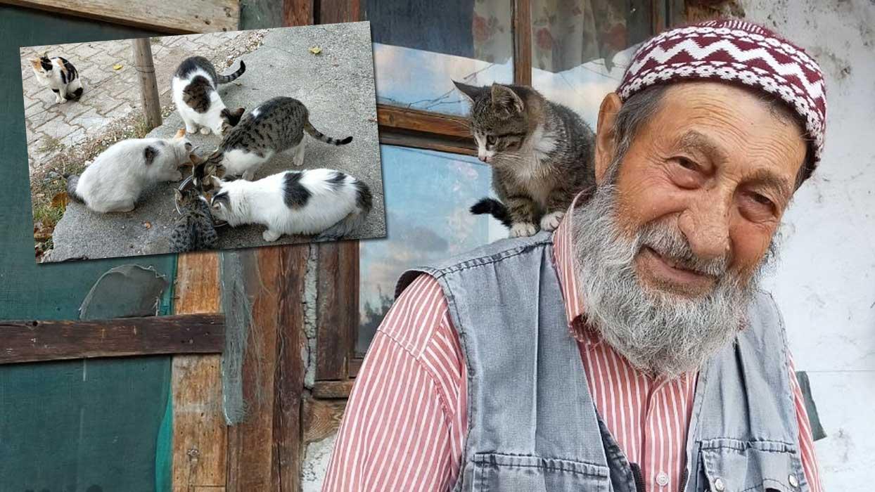 Sahipsiz kedilerin gönüllü bakıcısı