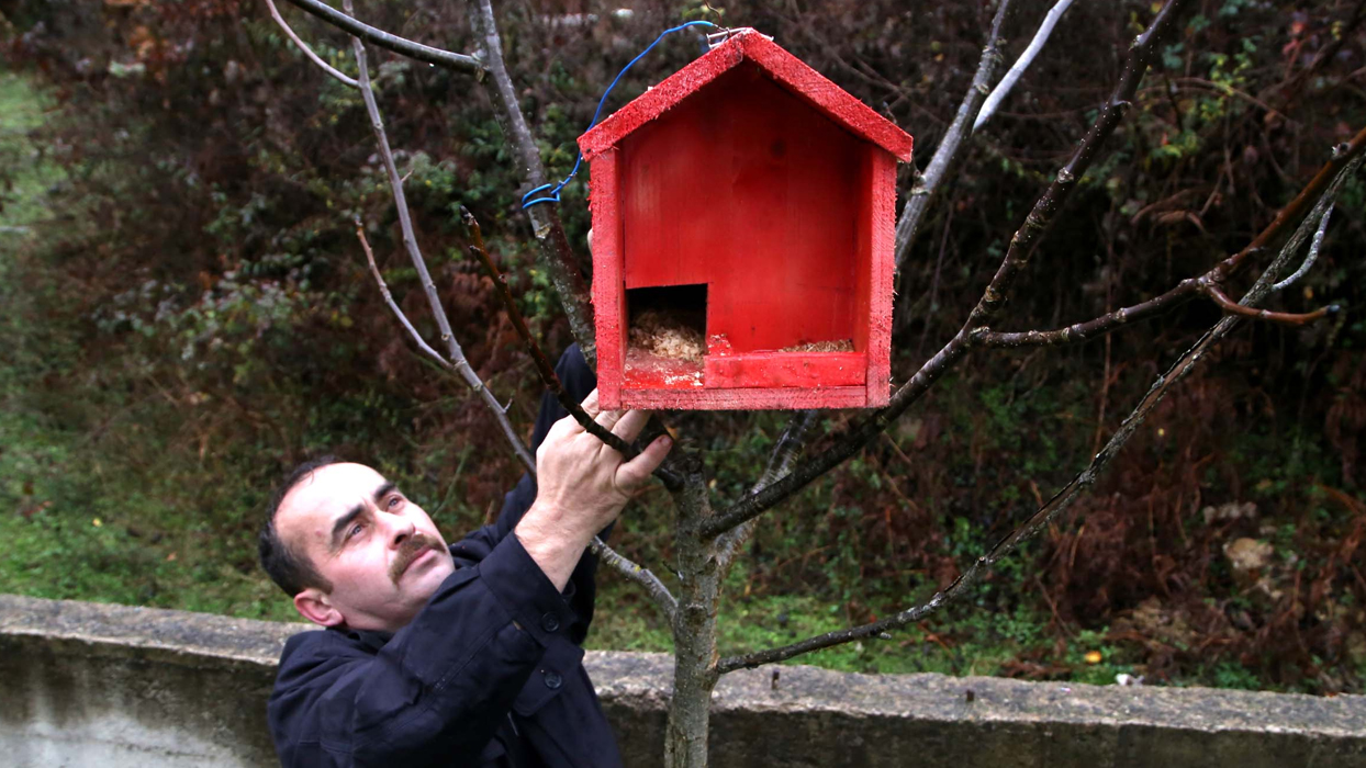 Tabutlardan kuş evi