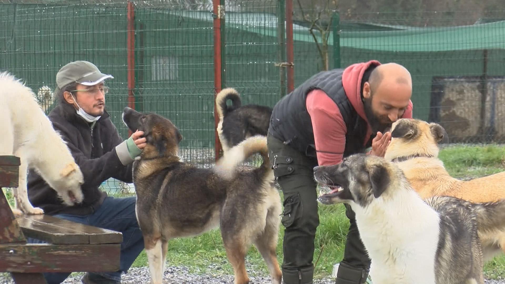 Barınaklardaki köpek sayısı pandemide arttı