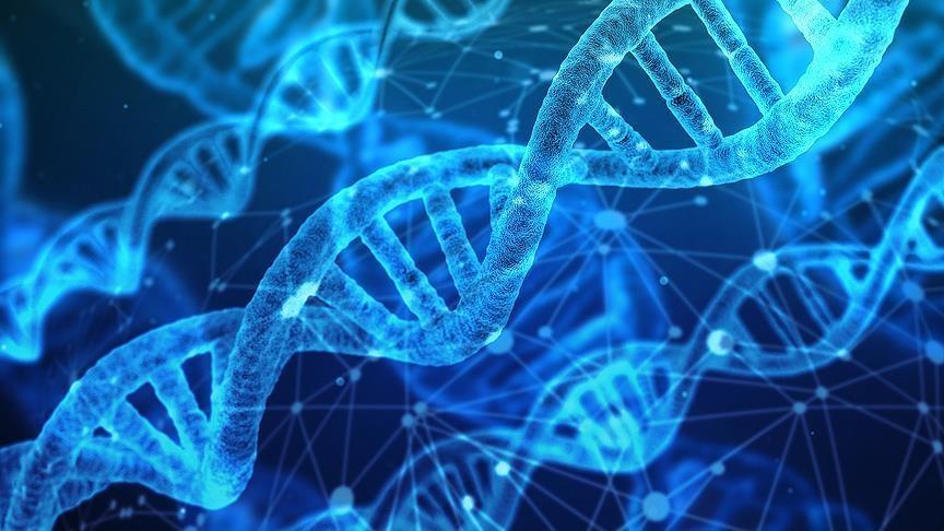 Dünyada bir ilk! Çinli bilim insanları gençlik genini buldu