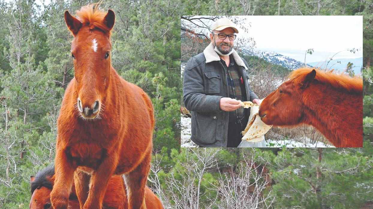 Yılkı atlarını 10 yıldır elleriyle besliyor