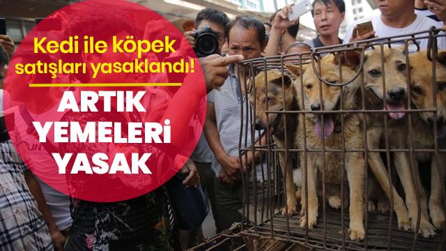Kedi ile köpek satışları yasaklandı! Artık yemeleri yasak