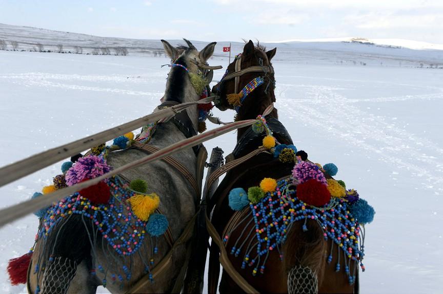 Çıldır'ın atlı kızaklarına Doğu Ekspresi dopingi