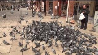 Güvercinler aç kaldı