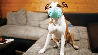 Koronavirüs hayvanlardan bulaşır mı? Dünya Sağlık Örgütü açıkladı