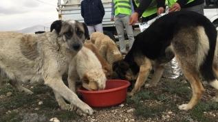 Aç kalan sokak hayvanları için 5 ton mama dağıtıldı