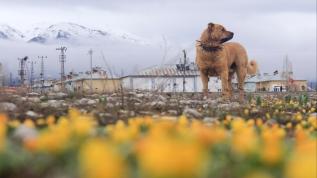Munzur'un dağlarında kar, ovalarında çiçekler var