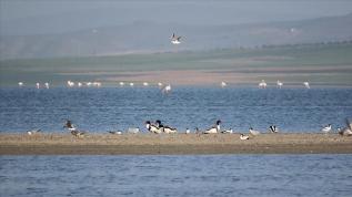 Kırlangıçlar Seyfe Gölü'ndeki yuvalarına döndü
