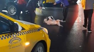 Sahibiyle gezen pitbull, bir anda sokak köpeğine saldırdı