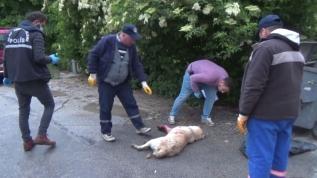 Sokak köpeği silahla vurularak öldürüldü