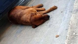 Sokak köpeğini sopayla döven adama 392 TL ceza