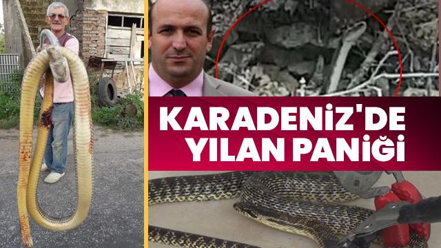 Doğu Karadeniz'de yılan paniği