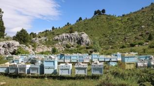 Arıcılar bu yıl bal verimi ve kalitesinden umutlu