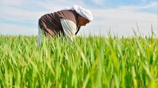 Bakan Albayrak'tan çiftçilere destek açıklaması